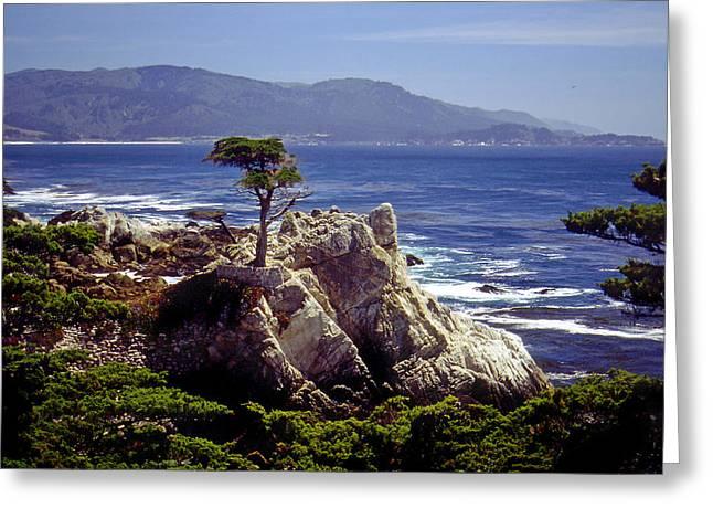 Lone Cypress Greeting Card by Rod Jones