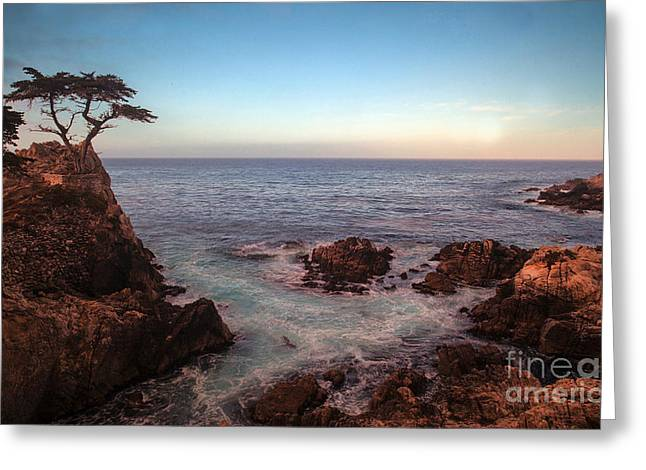Lone Cyprus Pebble Beach Greeting Card by Mike Reid