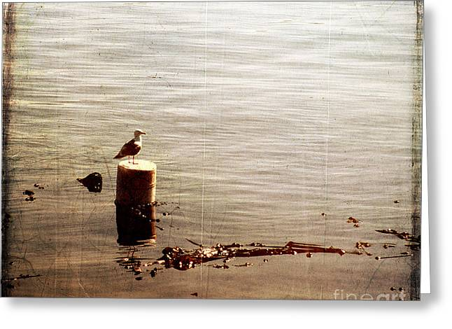 Lone Gull I I Greeting Card by Sharon Elliott