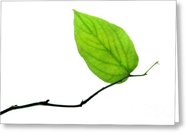 Lone Leaf Large Greeting Card by Dan Holm