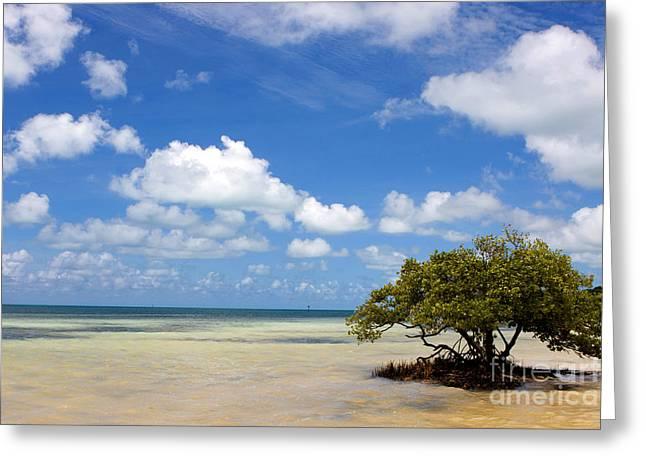 Lone Mangrove Tree Florida Keys Greeting Card