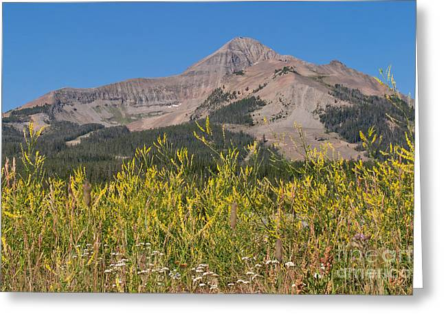 Lone Mountain And Wildflowers Greeting Card by Charles Kozierok