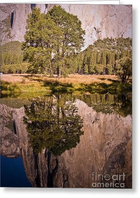 Lone Oak And El Capitan In Yosemite Greeting Card