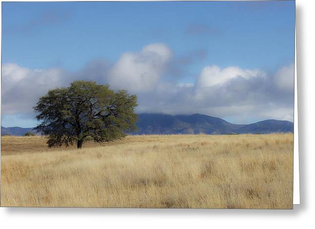 Lone Oak Greeting Card by Beverly Parks