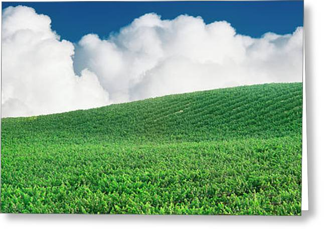 Lone Oak Tree In Vineyard Near Paso Greeting Card by Panoramic Images