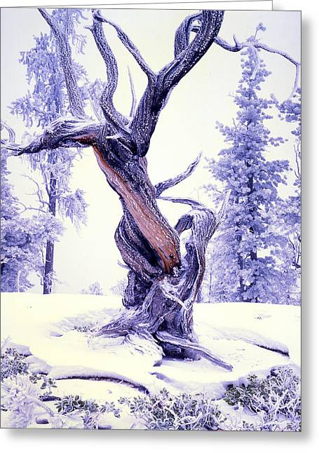Lone Pine Greeting Card by Ray Mathis