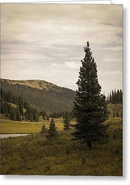 Lone Pine Greeting Card