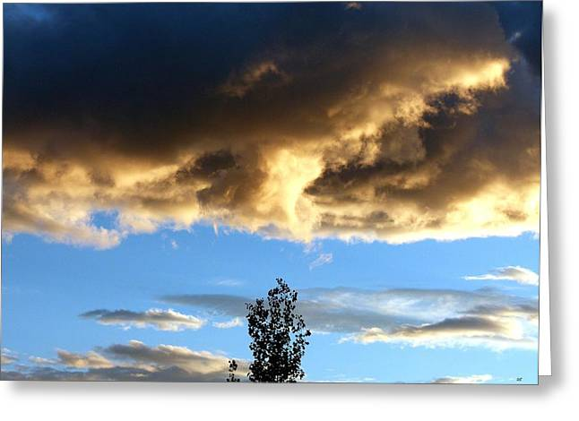 Lone Poplar At Sunset Greeting Card