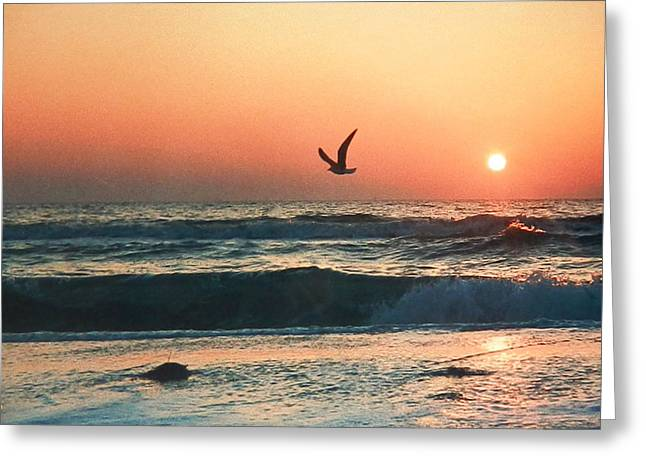 Lone Seagull Sunset Flight Greeting Card
