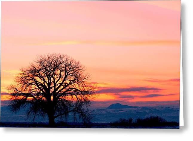 Lone Tree 1 Greeting Card by Rebecca Adams
