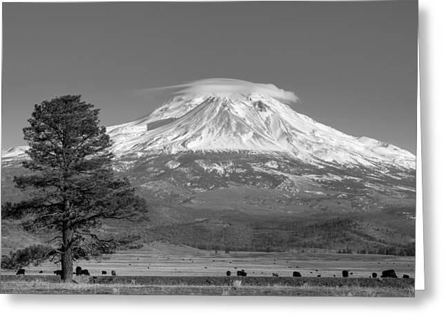 Lone Tree And Mount Shasta Monochrome Greeting Card by Loree Johnson