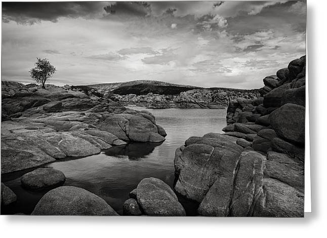 Lone Tree And Watson Lake Greeting Card