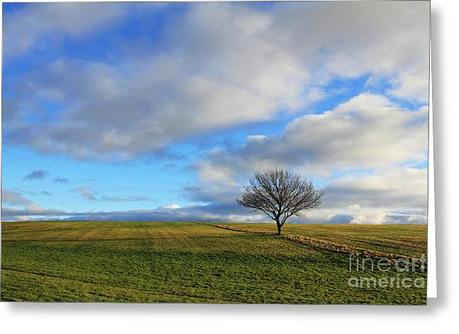 Lone Tree At Epsom Downs Uk Greeting Card