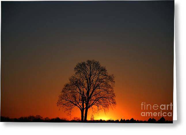 Lone Tree At Sunrise Greeting Card