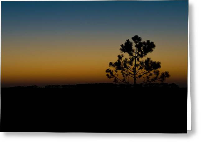 Lone Tree At Sunset Greeting Card