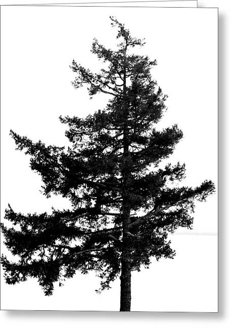 Lone Tree - Bw Greeting Card by Marilyn Wilson