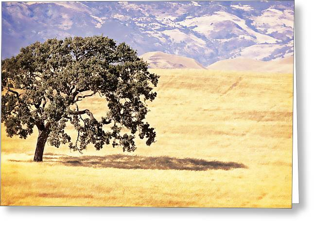 Lone Tree Greeting Card by Caitlyn  Grasso