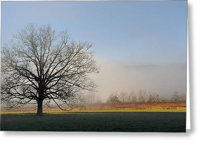 Lone Tree In Cades Cove Greeting Card