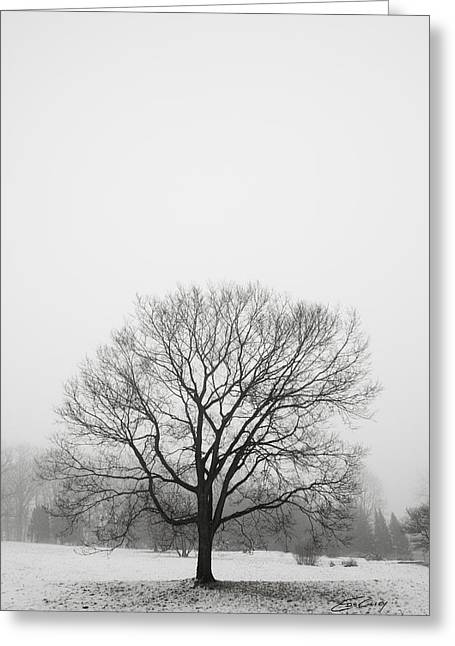 Greeting Card featuring the photograph Lone Tree In Snow by Ed Cilley