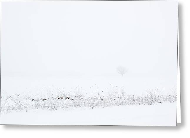 Lone Tree In Snow Greeting Card by Mary Bedy
