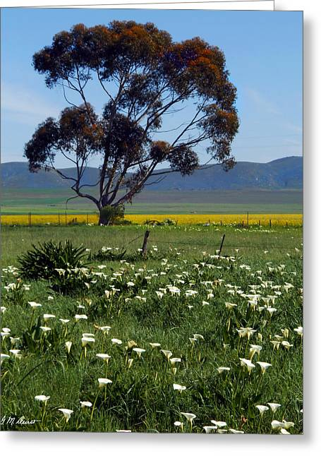 Lone Tree In The Calla Fields Greeting Card