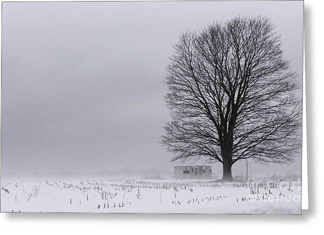 Lone Tree In The Fog Greeting Card