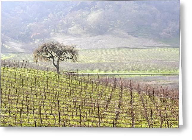Lone Tree In The Vineyard Greeting Card