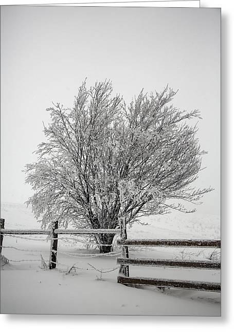 Lone Tree Greeting Card by John Haldane