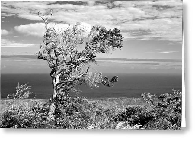Lone Tree Greeting Card by Max Ratchkauskas