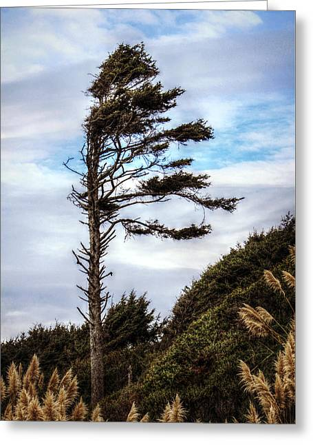 Lone Tree Greeting Card by Melanie Lankford Photography