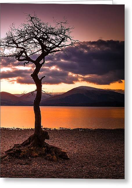Lone Tree Of Loch Lomond Greeting Card