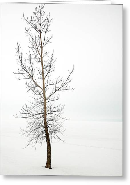Lone Tree On The Ottawa River Shoreline Greeting Card