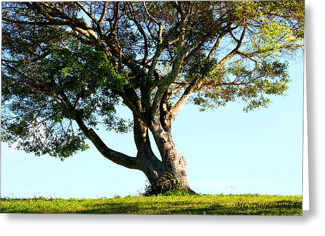 The Lone Tree Original Greeting Card by Marty Gayler