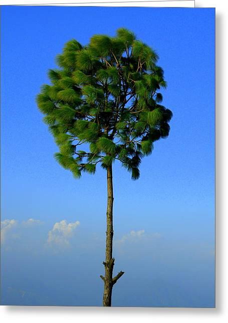 Lone Tree Greeting Card by Salman Ravish
