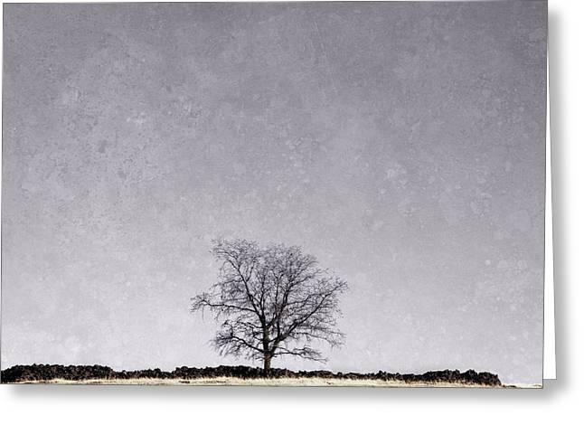 Lone Tree Greeting Card by Sheri Van Wert