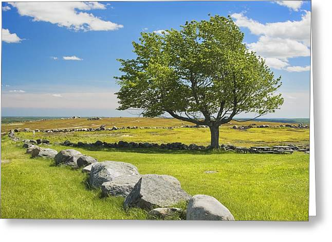 Lone Tree With Blue Sky In Blueberry Field Maine Greeting Card by Keith Webber Jr