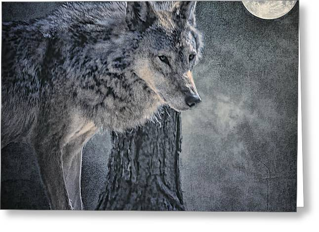 Greeting Card featuring the photograph Lone Wolf by Brian Tarr