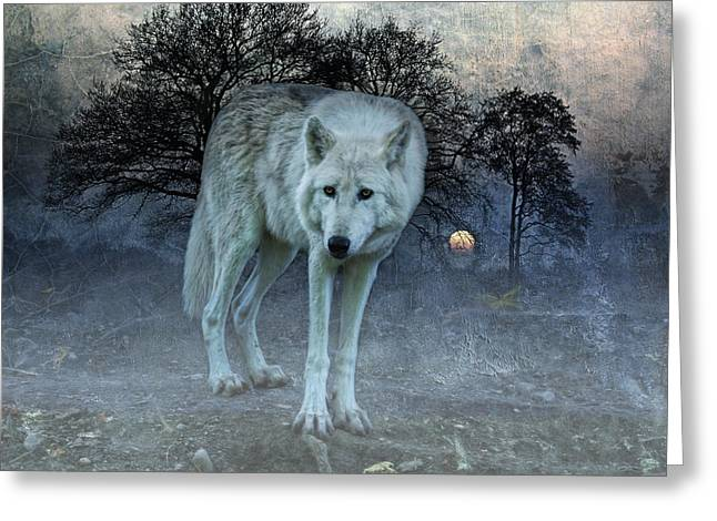 Lone Wolf Greeting Card by Joachim G Pinkawa