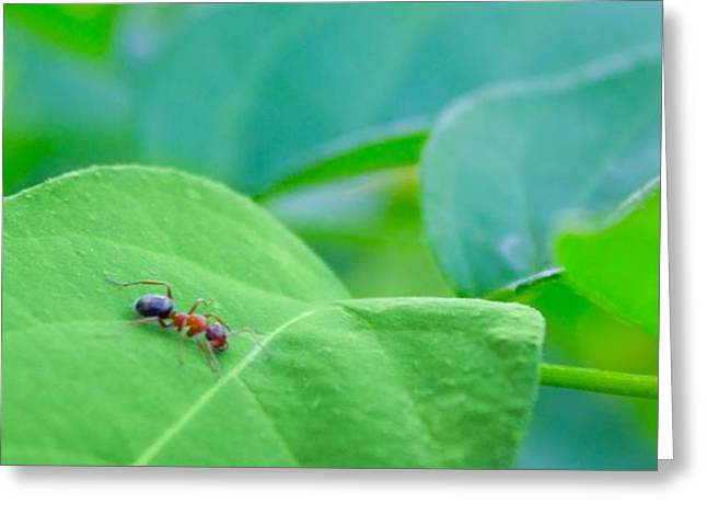 Lonely Ant Greeting Card