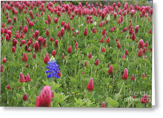 Lonely Bluebonnet Greeting Card by Jerry Bunger