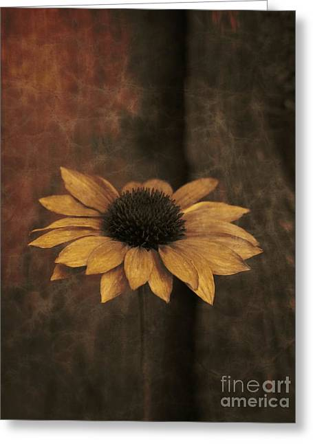 Greeting Card featuring the photograph Lonely Coneflower by Marjorie Imbeau