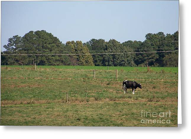 Lonely Cow Greeting Card by Kevin Croitz