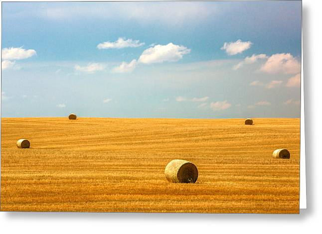 Lonely Fields Greeting Card by Todd Klassy