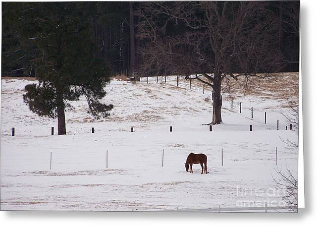 Lonely Horse Greeting Card by Kevin Croitz