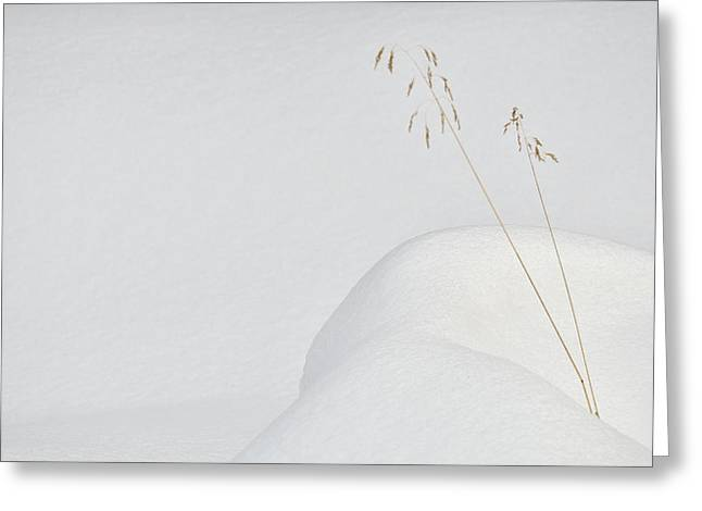 Lonely In The Snow Greeting Card