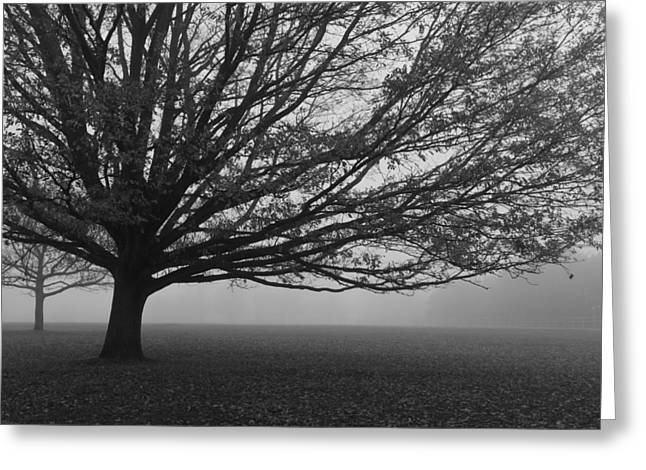 Greeting Card featuring the photograph Lonely Low Tree by Maj Seda