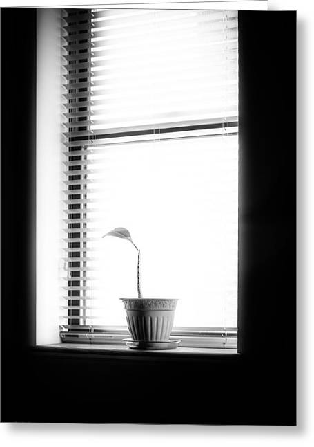 Lonely Plant Greeting Card by Bob Orsillo