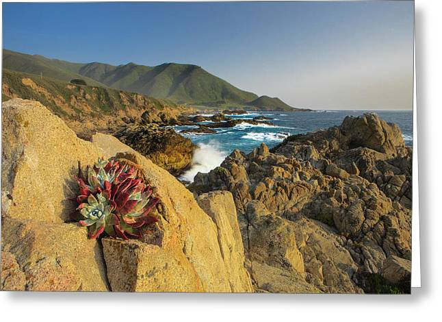Lonely Rock Plant Greeting Card by Tom Norring