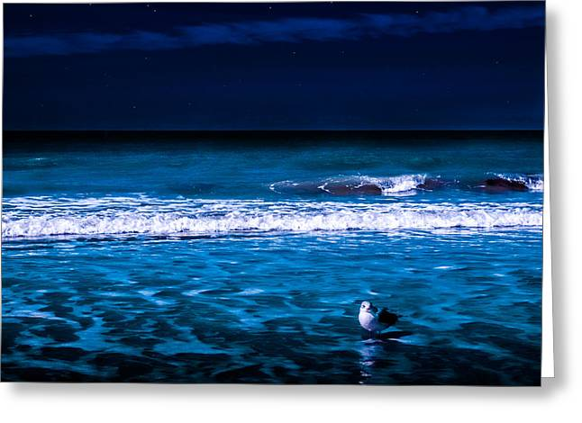 Lonely Seagull Greeting Card by Randy Sylvia