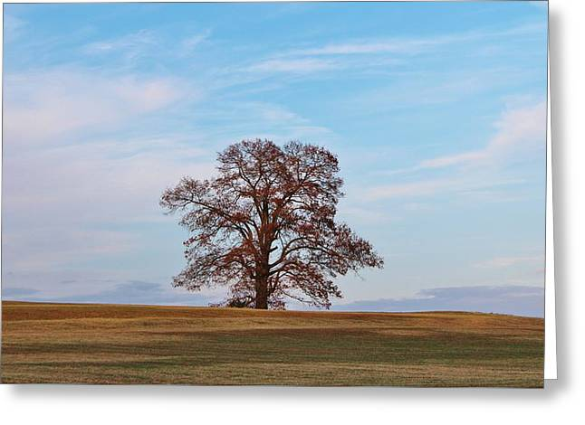 Lonely Tree Greeting Card by Cynthia Guinn